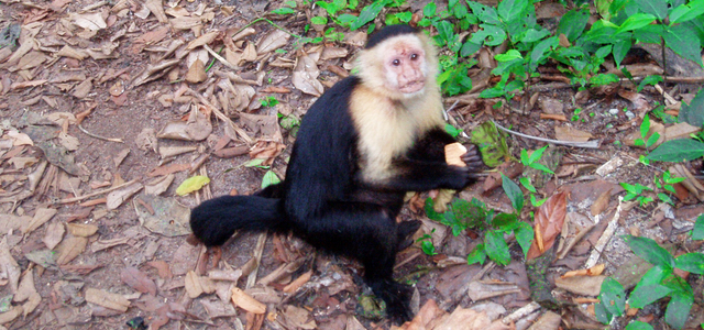 Wereldplek Costa Rica reistips Cahuita