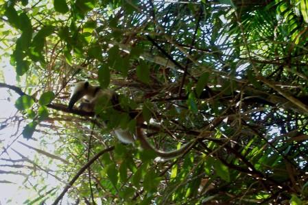 Reistips Costa Rica Fotoverslag