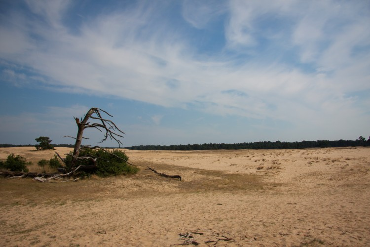 De zandvlaktes op de Veluwe