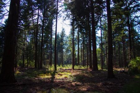 Fietsen over de Veluwe door het bos